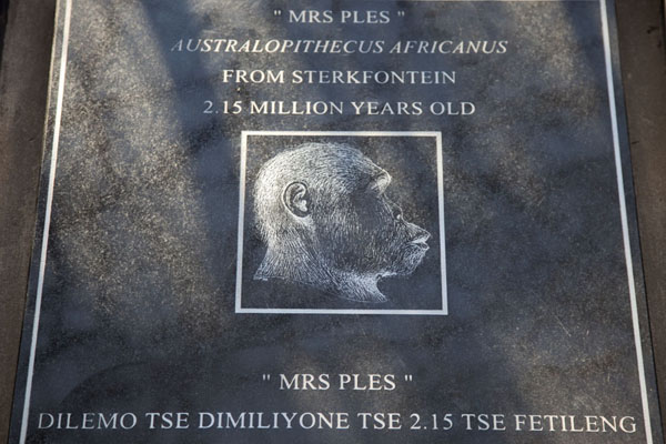 Picture of Mrs. Ples, the most famous find at Sterkfontein, commemorated on a plaque on the way to the entrance of the caves - South Africa - Africa