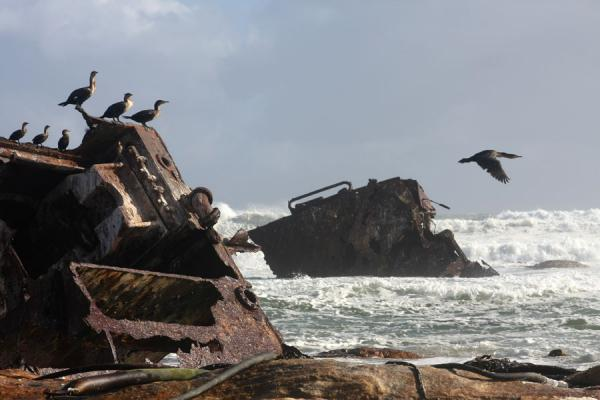 Birds resting on the shipwreck of the USS Thomas T. Tucker | Thomas T. Tucker trail | South Africa