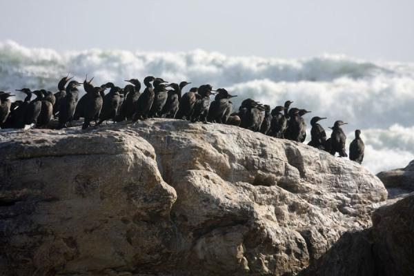 Black cormorants on a rock near the Thomas T. Tucker shipwreck | Thomas T. Tucker trail | South Africa