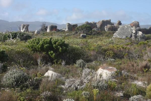 Rocks in the landscape of the Sirkelsvlei trail | Thomas T. Tucker trail | South Africa