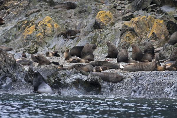 Picture of Seals sharing a beach at Esenhul