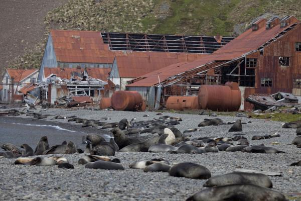 Whaling station of Stromness is in ruins | Fortuna to Stromness hike | South Georgia and South Sandwich Islands