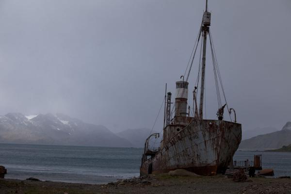 Picture of Petrel whaling ship wrecked on the shore at Grytviken