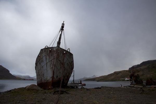 Foto di Georgia del Sud e isole Sandwich meridionali (Rusty remains of whaling ship on the shore of Grytviken)