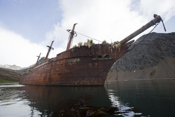 Foto de Wreck of the Bayard seen from belowOcean Harbour - Islas Georgias del Sur y Sandwich del Sur