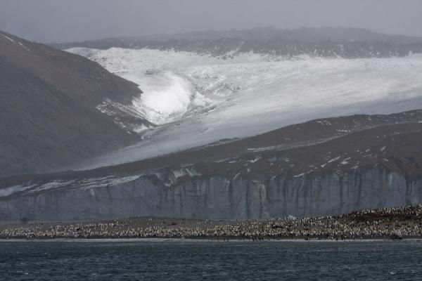 Picture of King penguin colony right at the mouth of massive Cook glacier