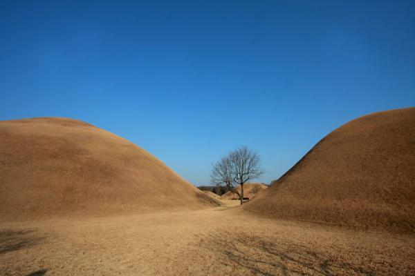 Picture of Gyeongju (South Korea): Detail of the tumuli park in Gyeongju