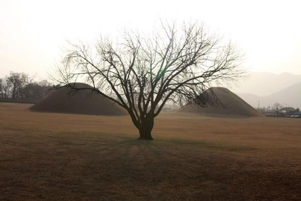 Picture of Gyeongju (South Korea): Lone tree and tumuli at the outskirts of Gyeongju
