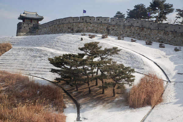 Picture of Hwaseong fortress (South Korea): Tree in snowy landscape under the wall of Hwaseong fortress