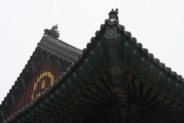 Picture of Jogyesa Temple (South Korea): Roof of the Great Hero Hall of Jogyesa in fine snow