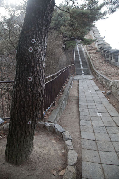 Picture of 1.21 Pine Tree Incident took place here; bullet marks still visibleSeoul - South Korea