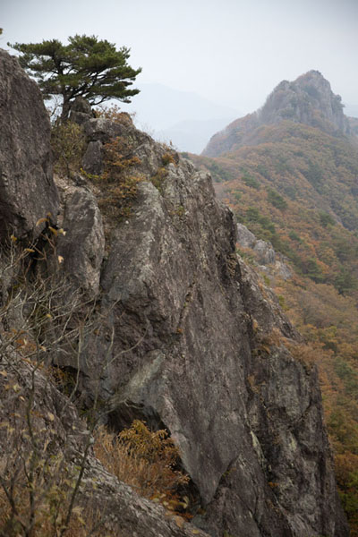 Tree and rocks with Seoraebong Peak in the distance seen from Bulchulbong Peak (622m) | Naejangsan Mountain | Corea del Sud
