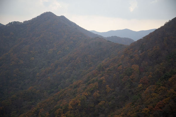 Mountains covered in autumn-colour trees east of Manghaebong Peak | Naejangsan Mountain | South Korea