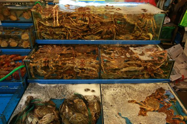 Picture of Noryangjin Fish Market (South Korea): Specializing in crab: stall in Noryangjin fish market