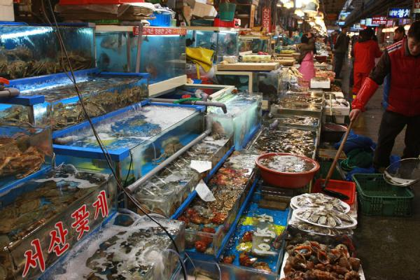 Foto de One of the many stalls with fishSeúl - Corea del Sur