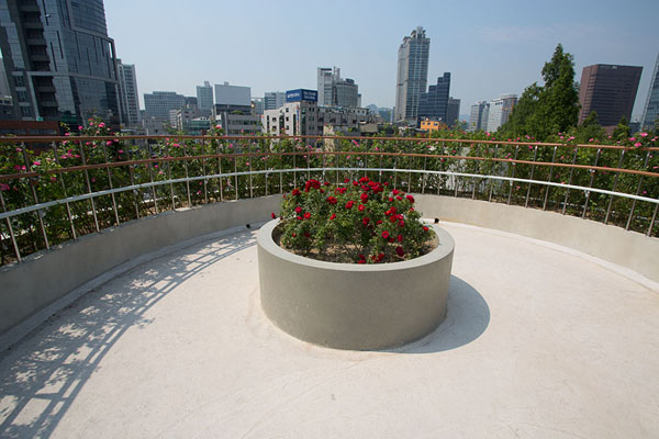 Flower pot with view of the Seoul skyline | Seoullo 7017 | Zuid Korea