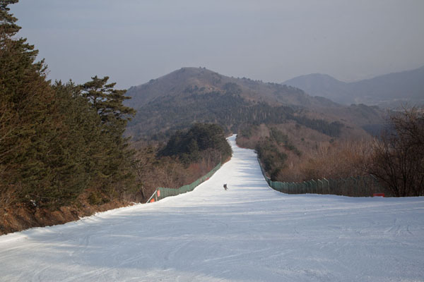 The Gold Fantastic run | Yongpyong skiing | South Korea