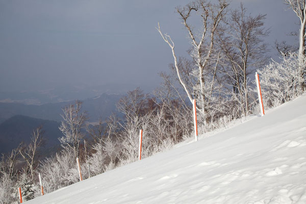 Artificial snow on the fence and trees halfway the Rainbow III run | Yongpyong skiing | South Korea