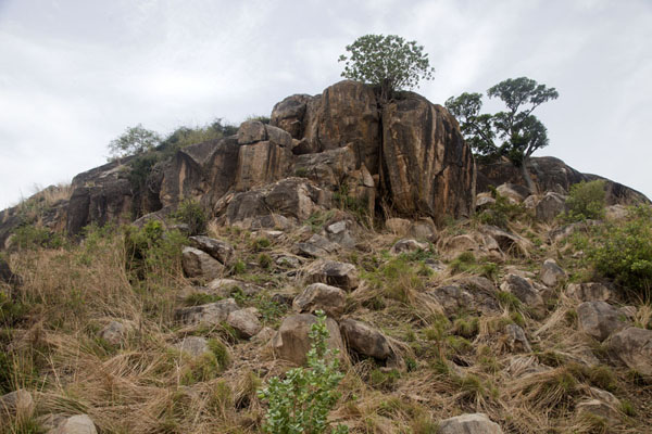 的照片  (Rocks and trees near the top of Jebel Kujul)