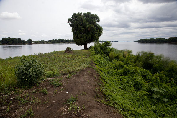 Mango tree on island in the river Nile | Juba Snapshots | South Sudan