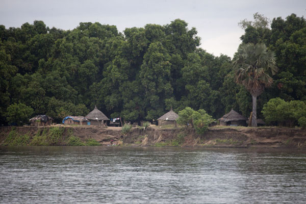 Picture of Juba Snapshots (South Sudan): Huts under big trees on the river Nile