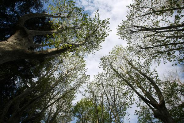 Picture of Campo del Moro (Spain): Trees of Campo del Moro pointing to the sky
