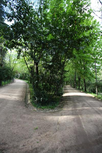 Picture of Campo del Moro (Spain): Path leading through the Campo del Moro