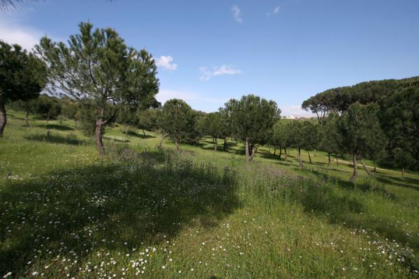 Nature in the city: green space everywhere in Casa de Campo | Casa de Campo | Spain