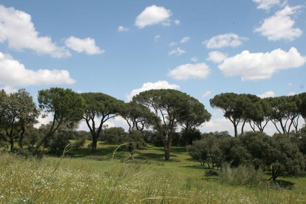 Some of the lovely trees to be found in Casa de Campo | Casa de Campo | España