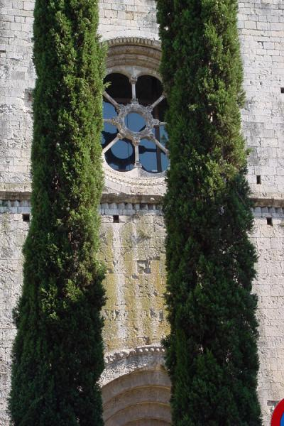 Trees and detail of Monastery of Sant Pere de Galligants, Girona | Girona | Spain