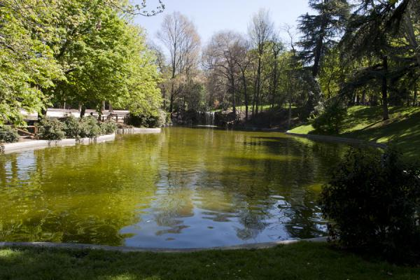 Foto van Trees surrounding a pond with waterfall in the Retiro Park - Spanje - Europa