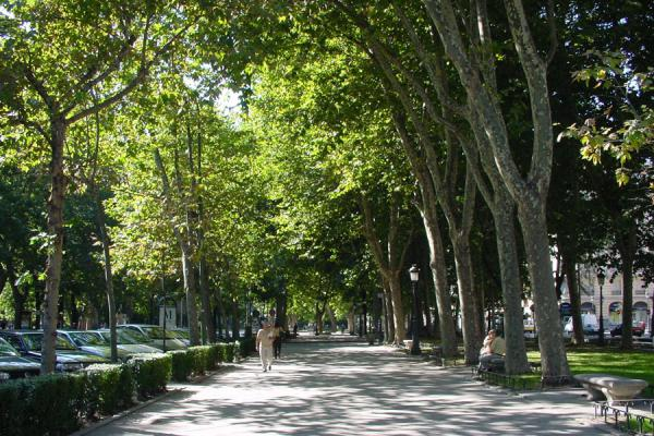 One of the quiet walking areas of the Castellana | Paseo de la Castellana | Spain