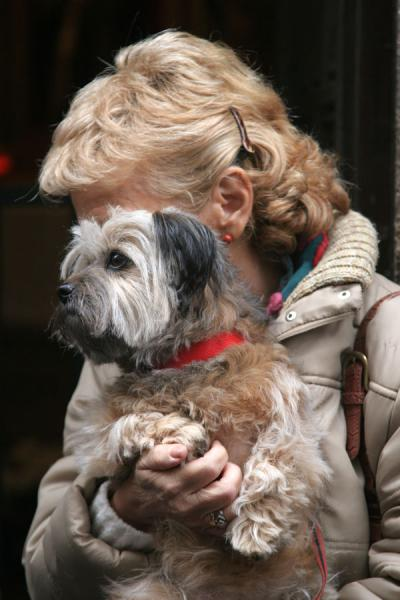 Foto di Woman with her dog waiting in the queue for the blessingMadrid - Spagna