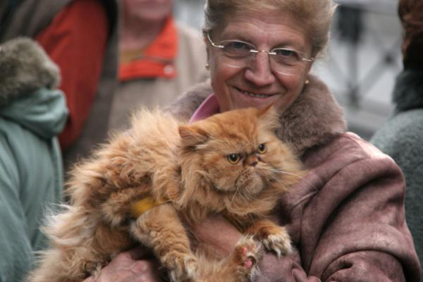 One of the few cats to be blessed | Zegenen van dieren San Antón | Spanje