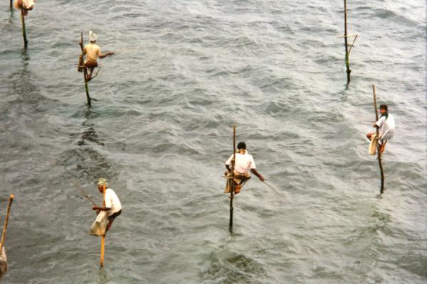 Picture of Galle (Sri Lanka): Fishermen on stilts, Galle