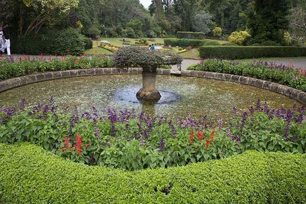 Circular pond between the Flower Garden and the Orchid House - 斯里兰卡 - 亚洲