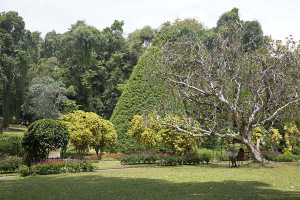 Foto van Open space in the Botanic Gardens of Peradeniya - Sri Lanka - Azië