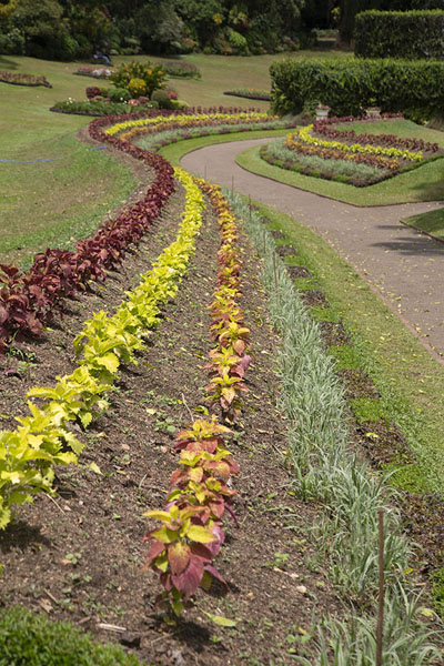 Foto di Pathway lined by flowers in the Botanic Gardens - Sri Lanka - Asia