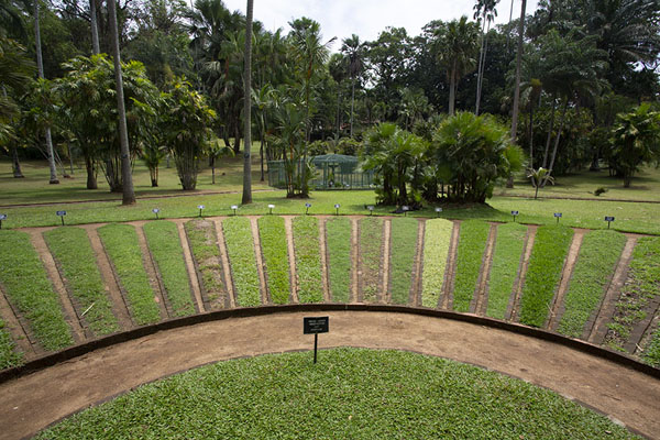 Neatly maintained lawn with a collection of different grass | Kandy Botanic Garden | Sri Lanka