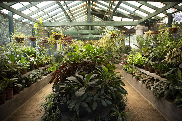 Foto de Plants on display in a greenhouse in the Botanic Garden of Kandy - Sri Lanka - Asia