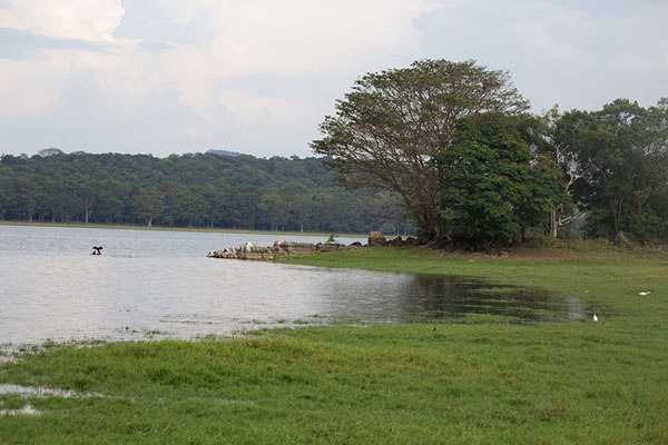 Photo de Shores of Minneriya reservoirMinneriya - Sri Lanka
