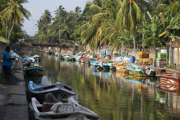 Foto van Boats docked at the Hamilton Canal in the afternoon - Sri Lanka - Azië