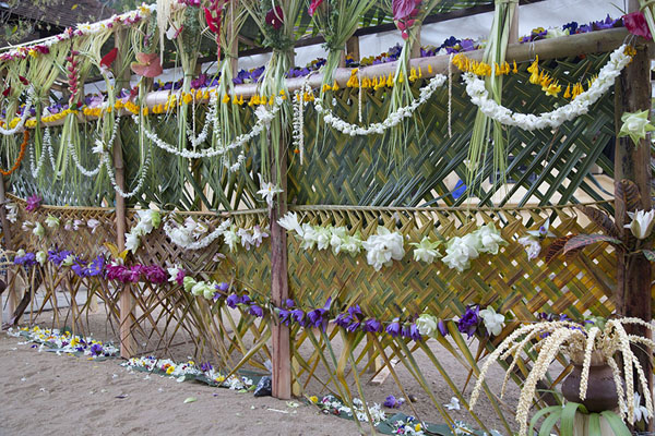 Flowers hanging from a fence near the Temple of the Sacred Tooth Relic | Templo del Dente de Buda | Sri Lanka
