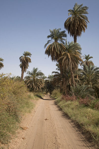 Dirt road lined by palm trees linking the western and eastern deffufa | Deffufas van Kerma | Soedan
