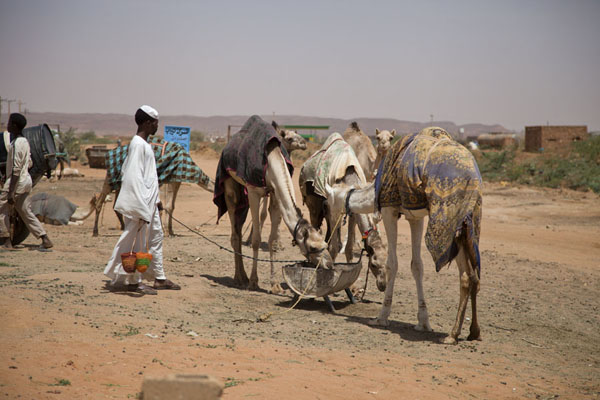Foto van Camels waiting at the camel market of OmdurmanOmdurman - Soedan