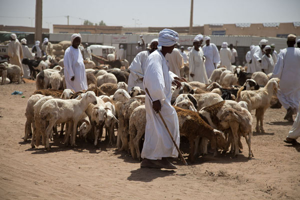 Sudanese men at the goat market of Omdurman | Omdurman Camel Market | 苏丹