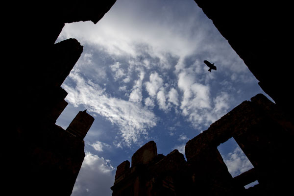 Hawk flying over a roofless building in Suakin | Suakin Old Town | Sudan