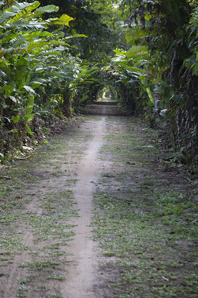 Photo de Straight Mopentibo trail in Peperpot Nature Park - le Surinam - Amérique