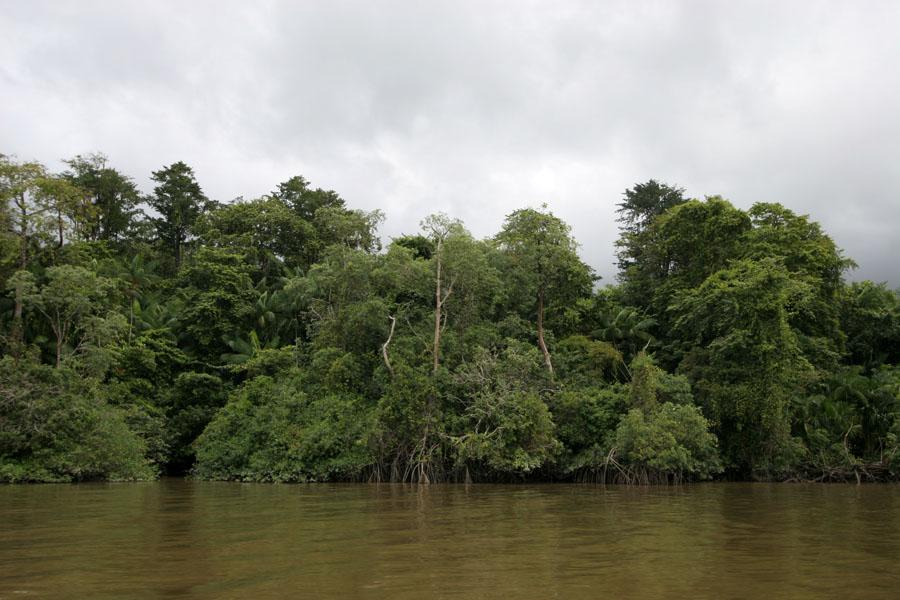 Photo de Tropical forest bordering the Marowijne river near GalibiGalibi - le Surinam