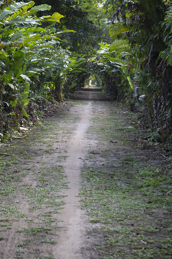 Picture of Mopentibo trail in Peperpot Nature ParkPeperpot - Suriname
